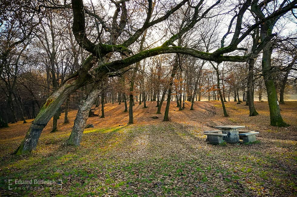 Padurea Hoia Cluj