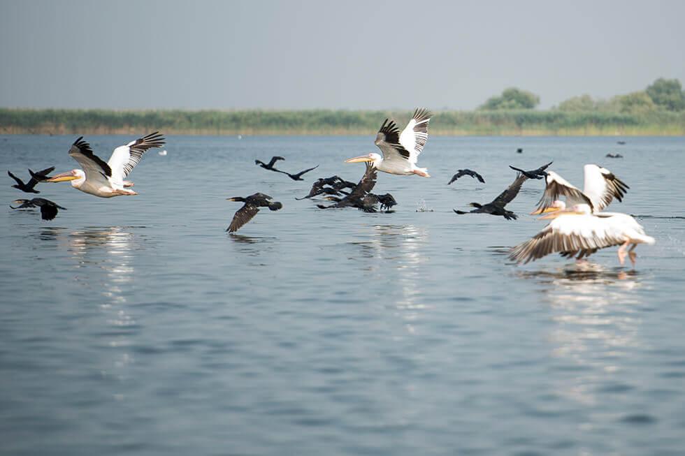 Delta Dunării Destinații Turistice Uimitoare din România